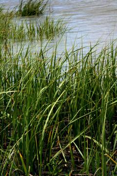 More_grass